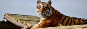 Panthera Africa – Big Cat Sanctuary