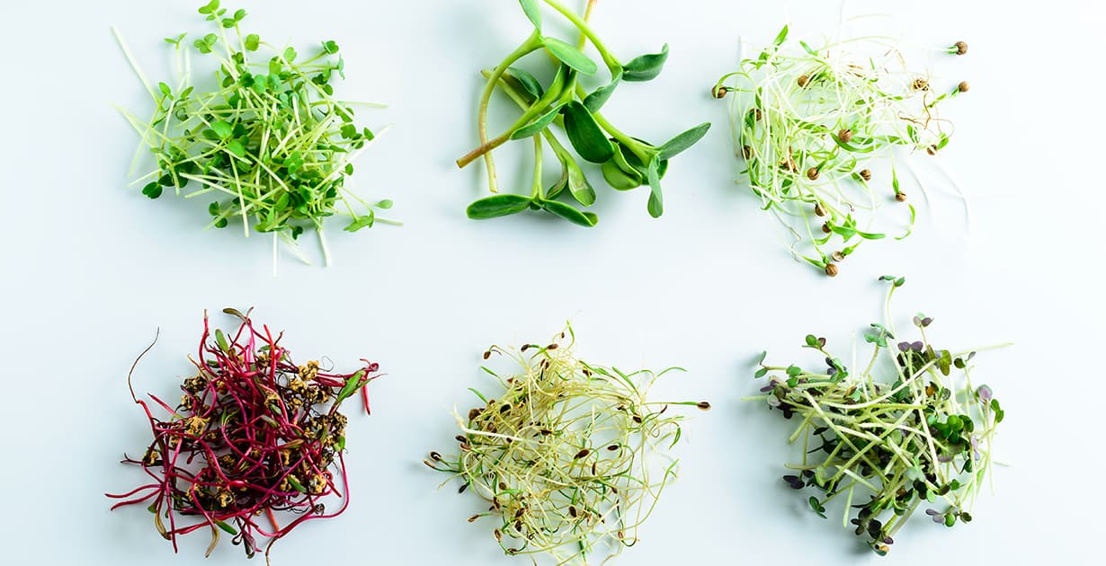 Microgreens a Sustainable Food Source